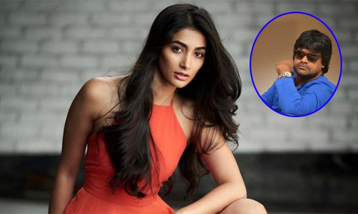 Pooja Hegde In Harish Shanker Valmiki Movie