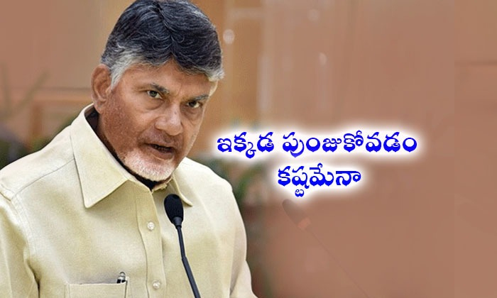 Tdp Back In Rayalaseema