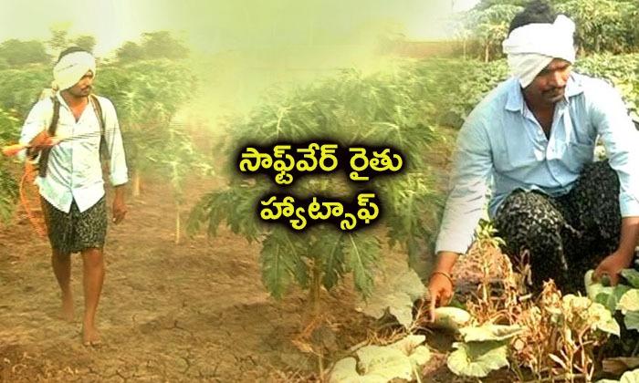 Software Engineer Doing Farming