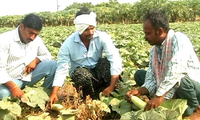 Software Engineer Doing Farming - Telugu Viral News Software Engineer Doing Farming -