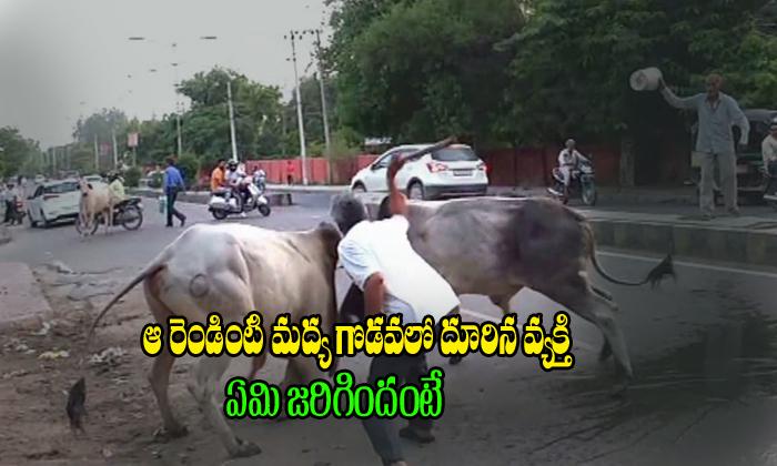 Man Enters Between Bulls Fighting See What Happened Next