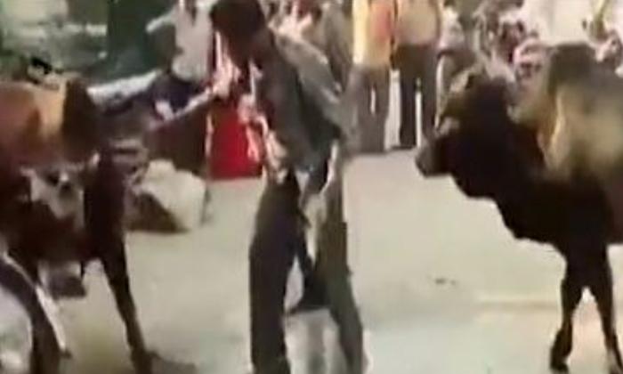 Man enters between bulls fighting see what happened next - Telugu Viral News Man Enters Between Bulls Fighting See What Happened Next -