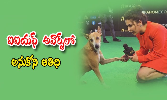 Dog Came To 2019 IIFA Awards Function Video-Adithi Bhatia International Film Academy