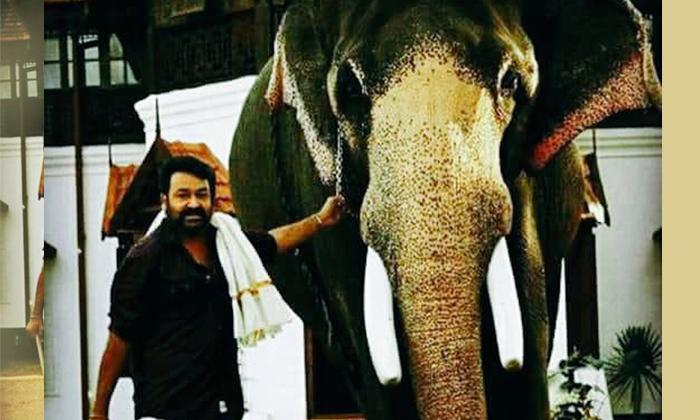 సూపర్ స్టార్ మెడకు చుట్టుకున్న ఏనుగు దంతాల కేసు,పరిస్థితి ఏంటో-Movie-Telugu Tollywood Photo Image
