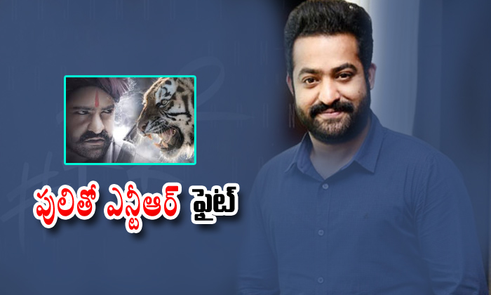 Juniour Ntr Fight With Tiger