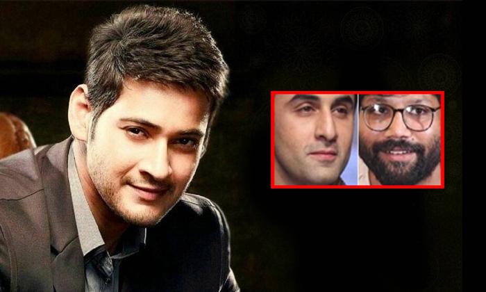 Mahesh Babu Movie Line Goes Bollywood For Ranbir Kapoor-Kabeer Singh Director Mahesh Ranbir Kapoor Telugu Tollywood Box Office