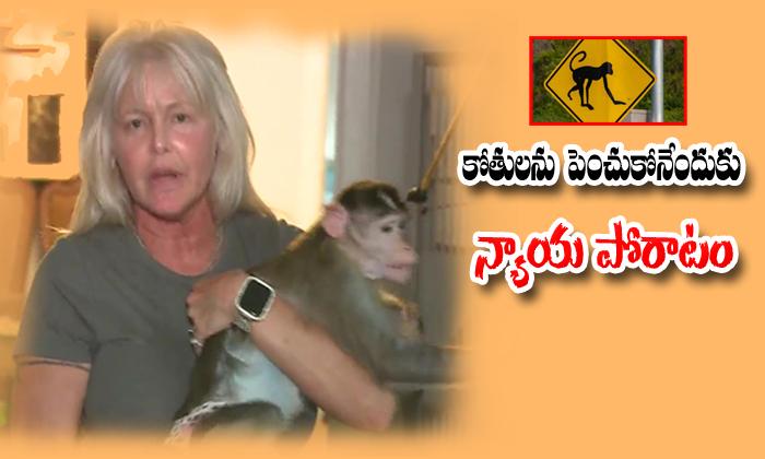కోతులను పెంచుకునేందుకు న్యాయ పోరాటం-Telugu NRI-Telugu Tollywood Photo Image