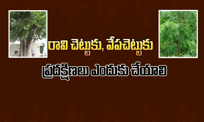 TeluguStop.com - Why Do We See Neem And Peepal Tree In Temple