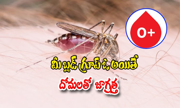 Mosquitoes Bite O Blood Group People More