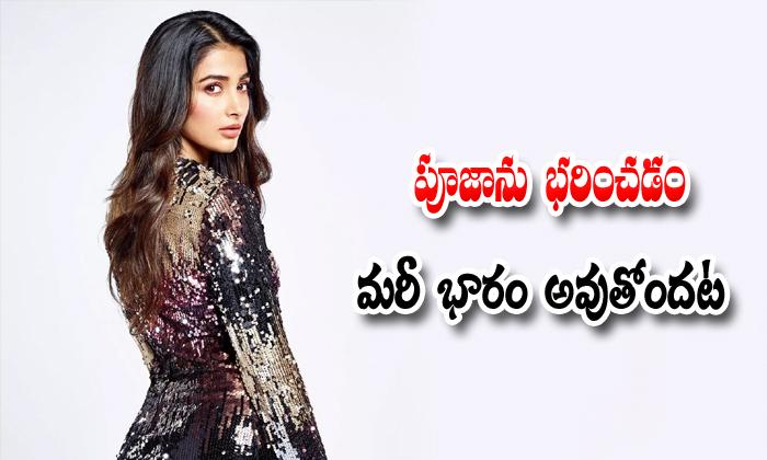 Pooja Hegde Is The Highest Grossing Heroine Of Tollywood