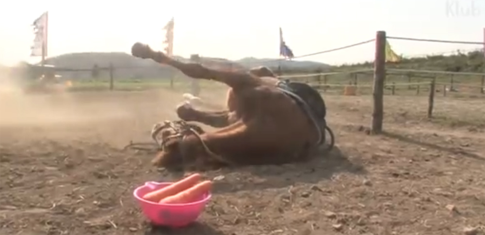 Telugu Different Horse, Horse Not Want Do Work When Try To Ride, Lazy, Telugu Viral News Updates, Viral In Social Media-