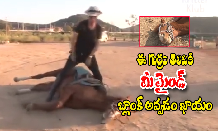 This Horse Not Want Do Work When Try To Ride He Acted As Dead