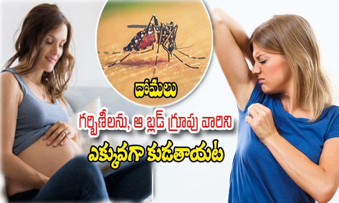 Pregnancy Woman And That Blood Group More Attractive To Mosquitoes