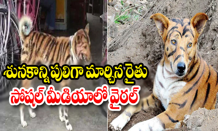 Farmer Paints Dog To Look Like Tiger