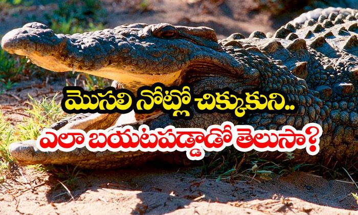 Man Frees Himself Form Crocodile Mouth