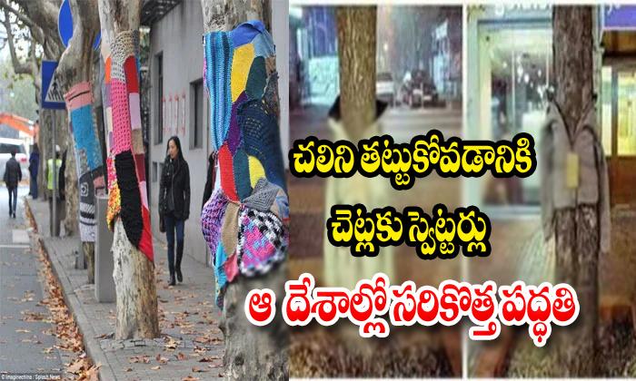 Trees Are Wearing Sweaters- Telugu Viral News Trees Are Wearing Sweaters--Trees Are Wearing Sweaters-