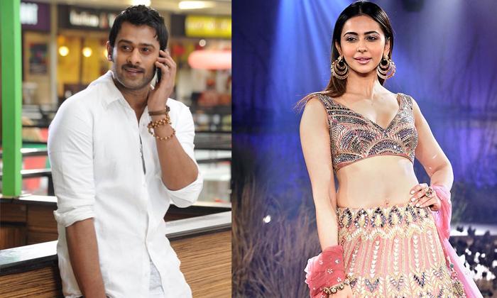Telugu Rakul Act In Telugu Tamil And Hindhi Movies, Rakul Act In Venkatadri Express, Rakul Preet Singh, -