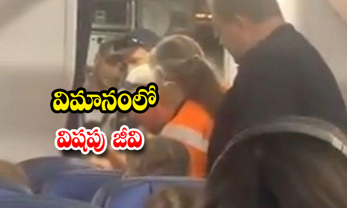 TeluguStop.com - A Woman Has Been Stung By A Scorpion While Travelling On Flight