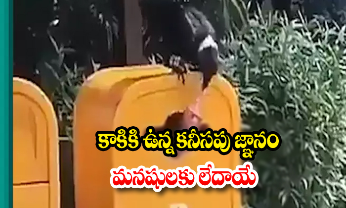 How A Crow Becomes Sanitary Cleaner Teacher