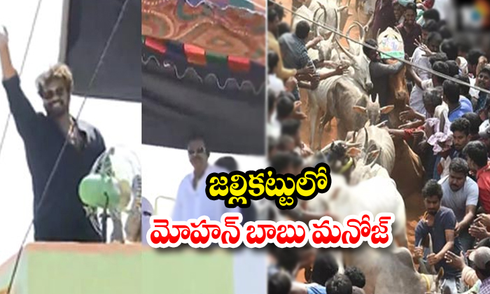 TeluguStop.com - Manchu Mohan Babu And Manoj Attend The Jallikattu