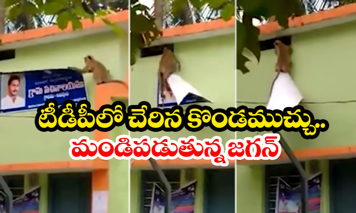 Monkey Removes Jagan Flexi Video Goes Viral-Monkey Pedapudi Viral