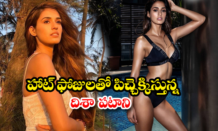 Disha Patani stunning hot images