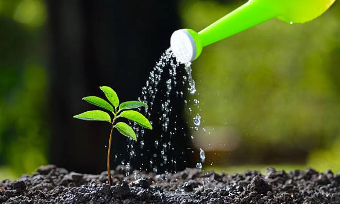Telugu . America California Women, Loves The Plants, Plastic Plant, Telugu Nri Latest Update-Telugu NRI