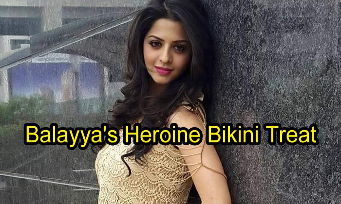 Balayya's Heroine Bikini Treat