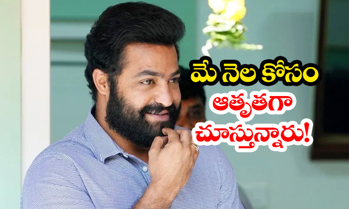Ntr Fans Waiting For May 20