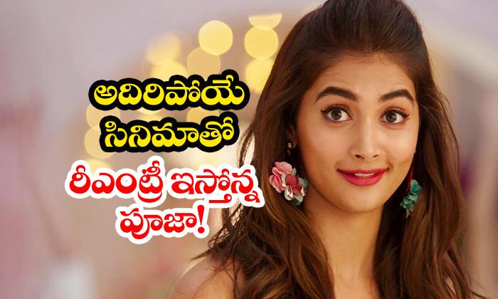 TeluguStop.com - Pooja Hegde To Comeback With Vijaya In Kollywood