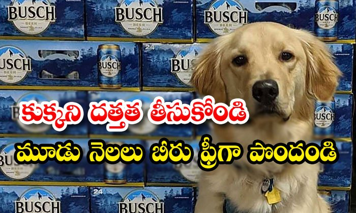 Busch Offers Free Beer For Fostering Dogs