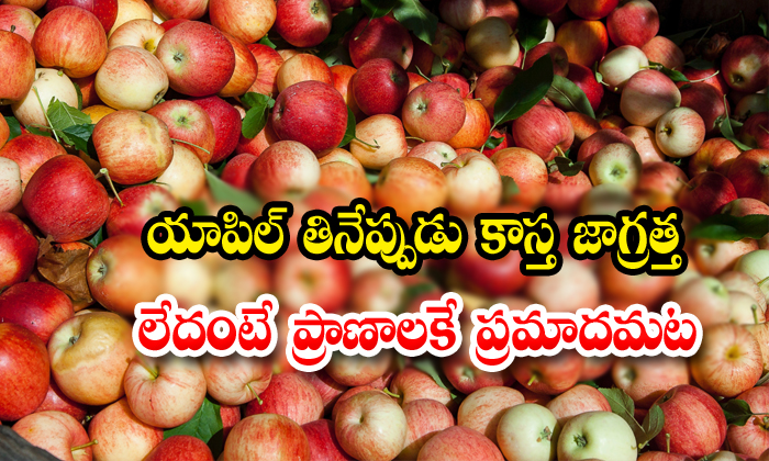 Do You Know Apple Seeds Are For Health