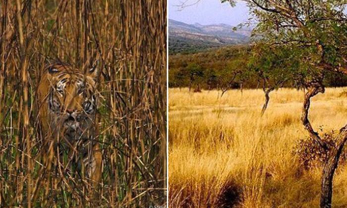 ఏంటి ఈ ఫొటోలో పులులు ఉన్నాయా ఎక్కడ ఉన్నాయ్-General-Telugu-Telugu Tollywood Photo Image