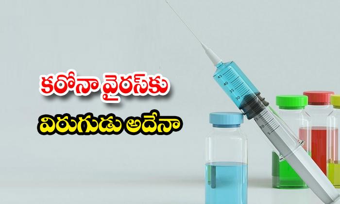 Coronavirus Tb Vaccine Newyork University
