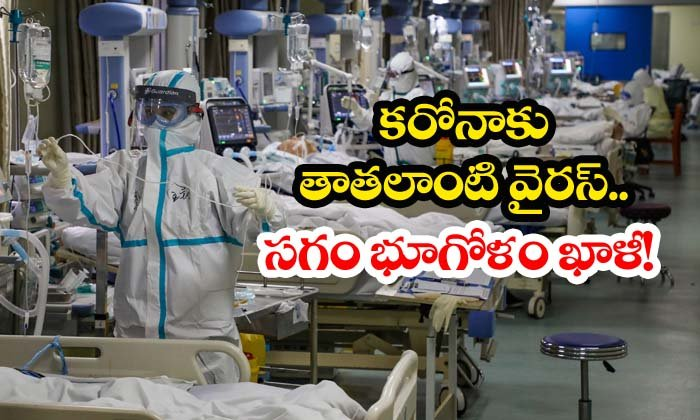 Bird Flu To Be Most Dangerous Than Corona Virus