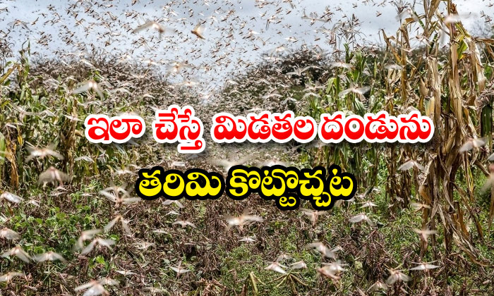 Tips To Eliminate Locusts