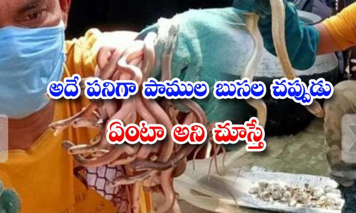 43 Cobra Rescued From House In Odisha
