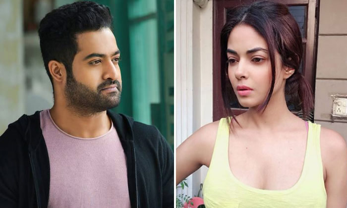 Telugu Meera Chopra, Ntr Fans, Ntr Fans Bad Comments, Ntr To Sorry To Meera Chopra, Police Case On Ntr Fans, Twitter-