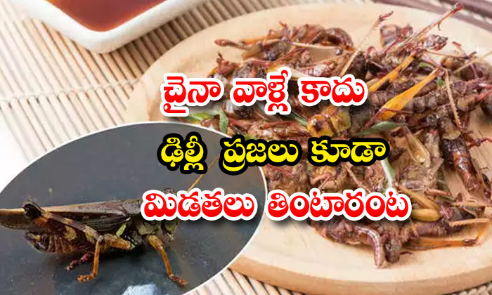 Locusts Meals Dish In Delhi