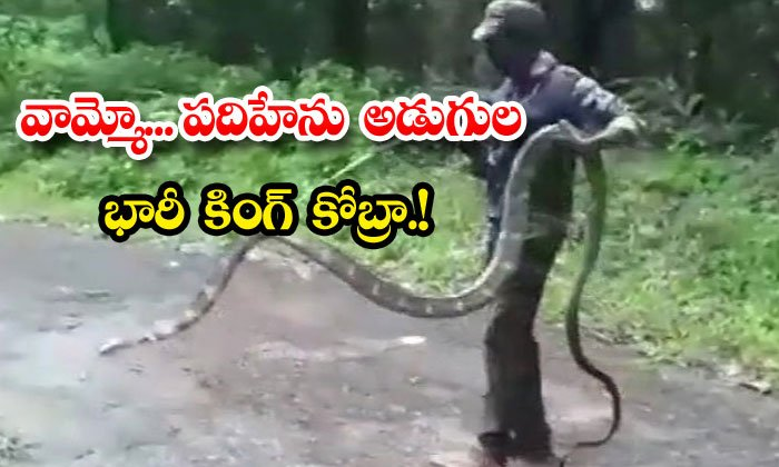 Video Of 15 Feet Cobra Rescue In Tamil Nadu Goes Viral