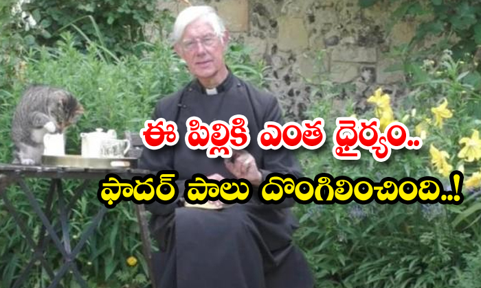 Cat Steals Priest Milk Viral Video