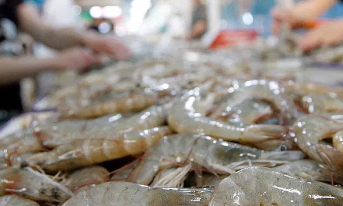 అమెరికా నుండి చైనాకు వచ్చిన రొయ్యలకు కరోనా పాజిటివ్.. చైనా ఏం చేసిందంటే-General-Telugu-Telugu Tollywood Photo Image