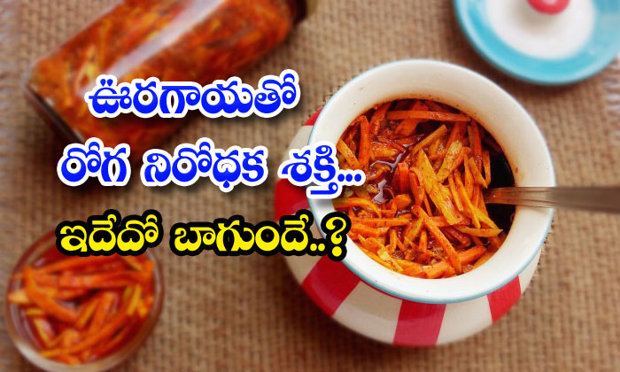 TeluguStop.com - Immunity Power Pickle