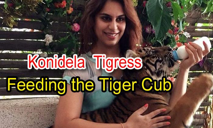 Konidela Tigress Feeding The Tiger Cub