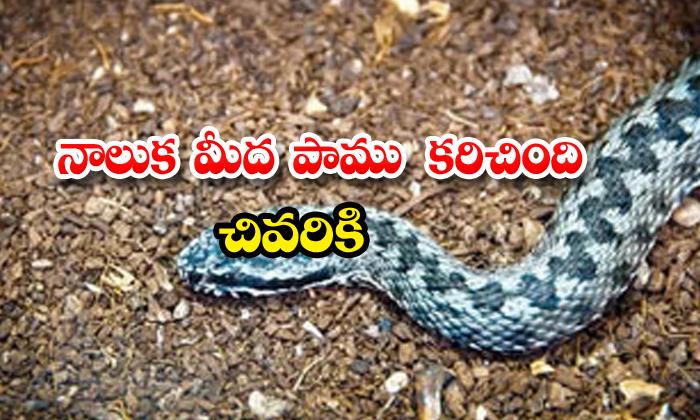 Snake Bitten Tongue German