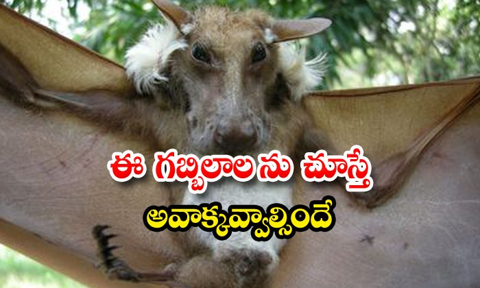 Dog Face Bat Pic Goes Viral