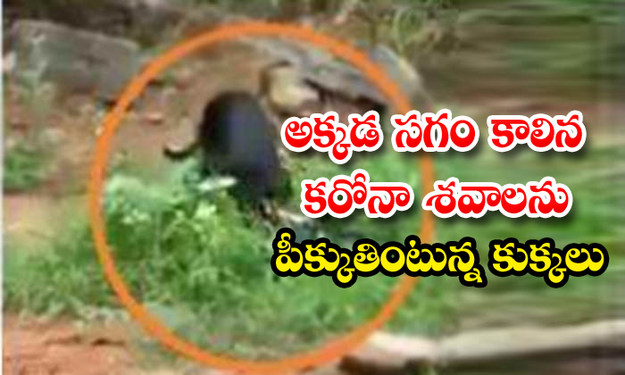 Dogs Eating Corona Dead Body In Funeral Ground In Hyderabad
