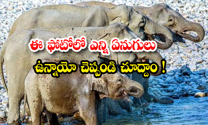 Elephants Puzzle Photo Viral Internet