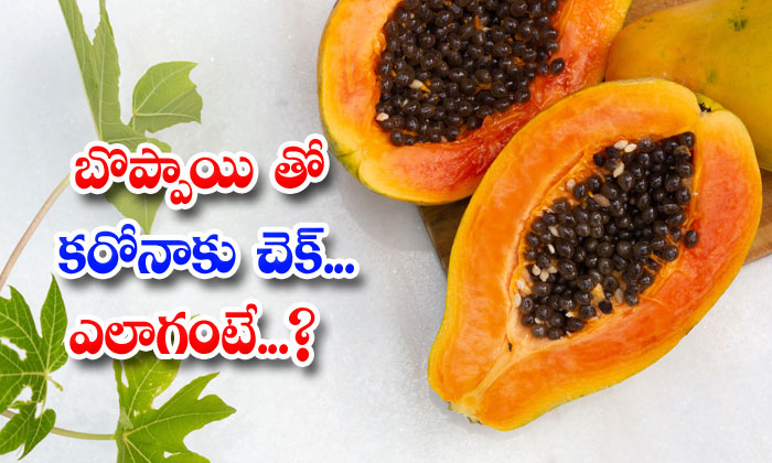 TeluguStop.com - Papaya Can Fight Against To Coronavirus