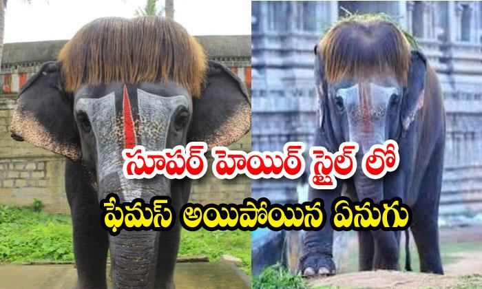 Sengamalam Elephant Social Media Mannargudi